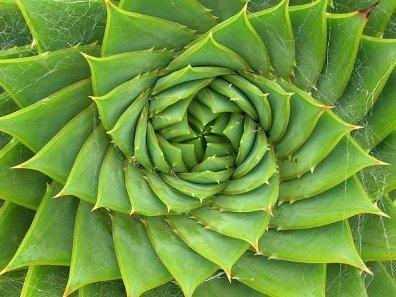trajectory fibonacci nature