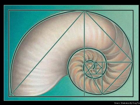 nautilus shell 1